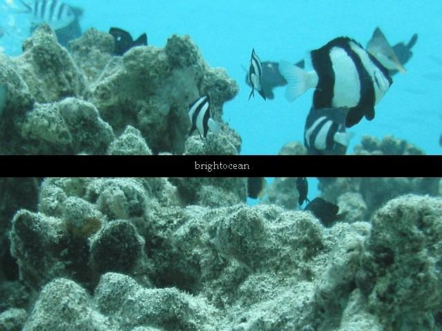 brightocean